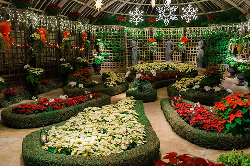 Phipps Conservatory Winter Flower Show.