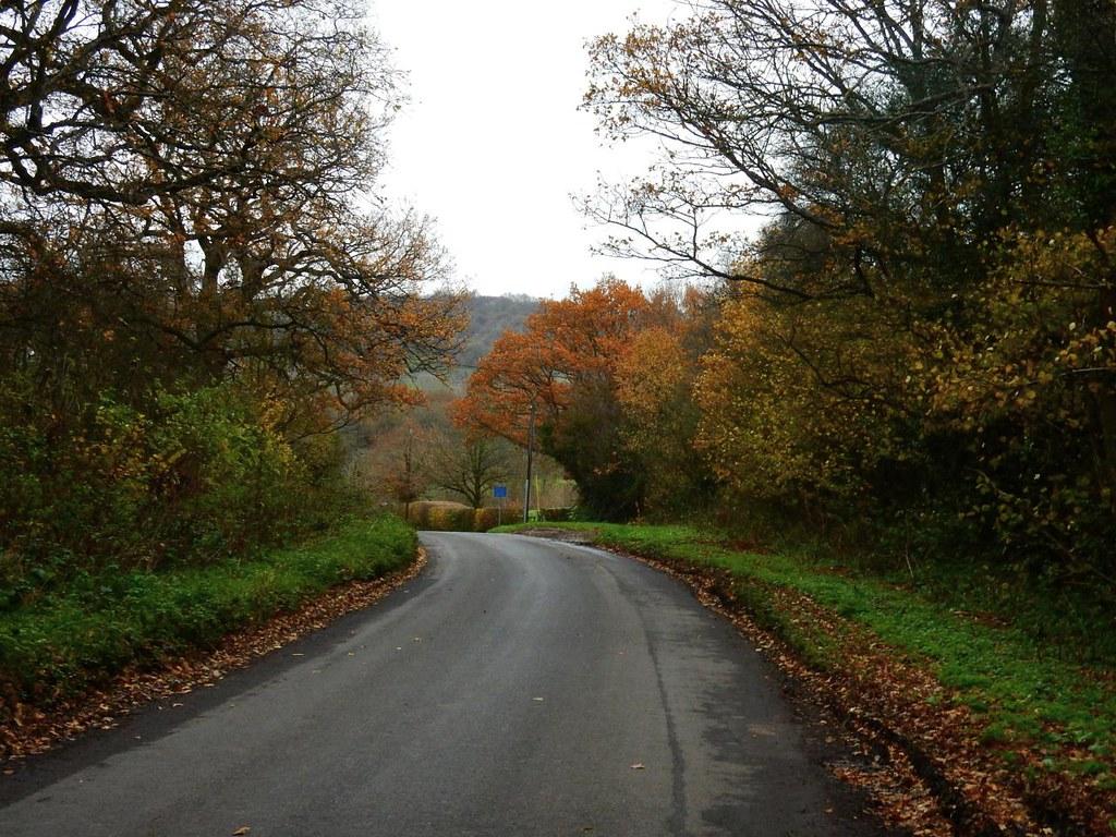 Tree colour Leigh to Sevenoaks