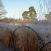 Frosty fence Friday by jeannie debs