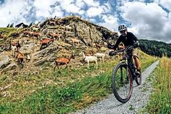 Davos na kole – sen, nebo skutečnost?