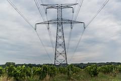06-Vigne et ligne électrique - Photo of Saint-Quentin-de-Caplong