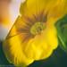 Flowers really do intoxicate me. ~Vita Sackville-West by bratli