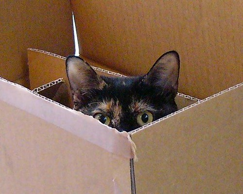 箱のたまこ - 無料写真検索fotoq