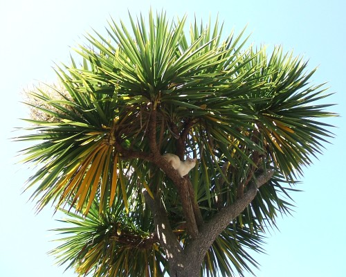 20060508 cat-palm-tree | Flickr - Photo Sharing!