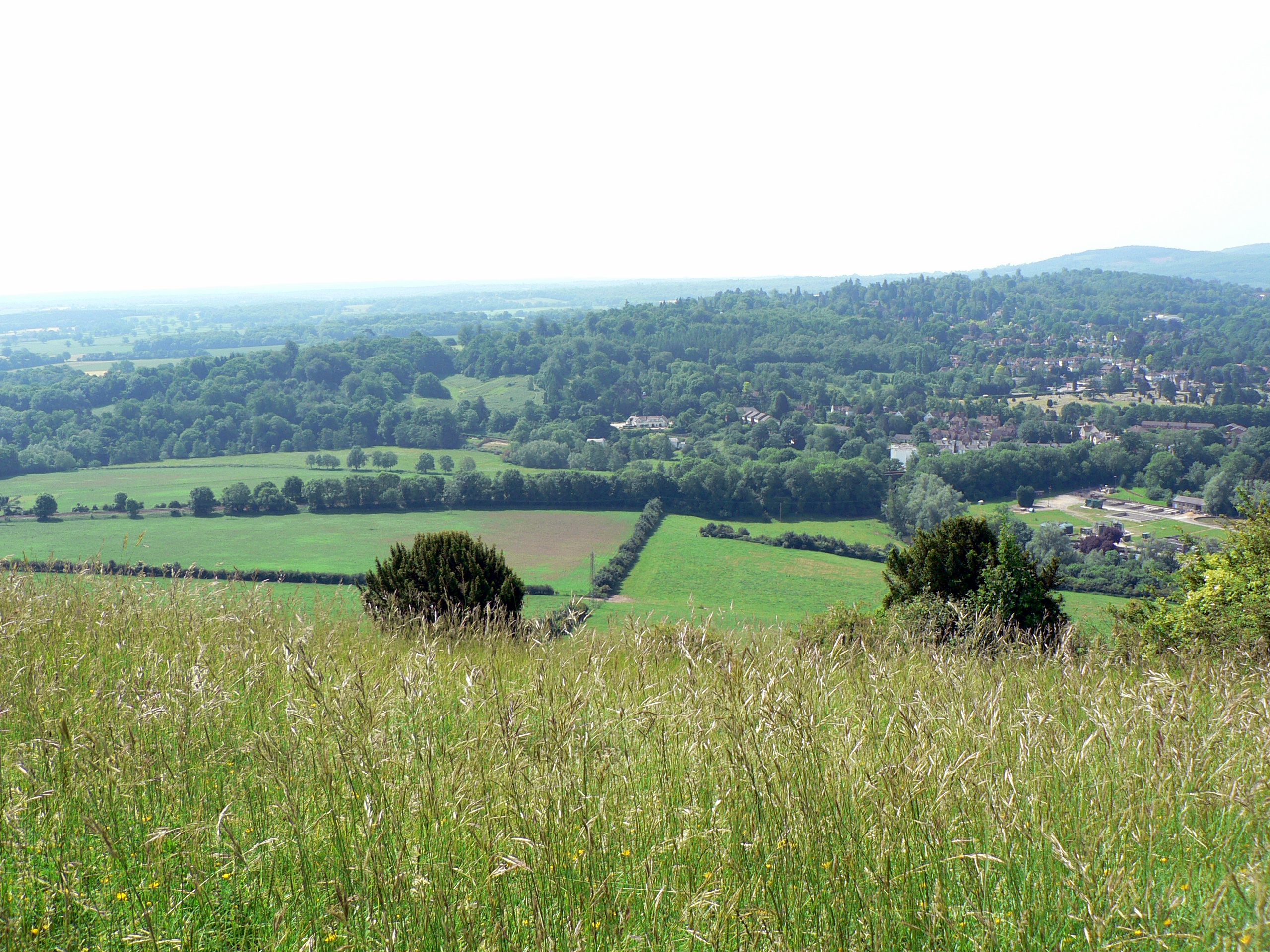 The view from Box Hill