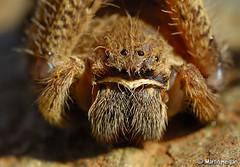 Wet Rain-Spider macro