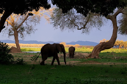 Elephants at Zambezi river