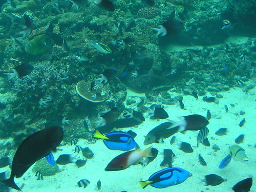 Marine life at Reef HQ Townsville