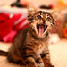 I am kitten, hear me roar! by Stephen Poff