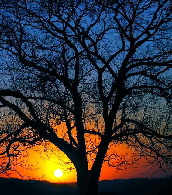 another sunset, another tree por João Paglione