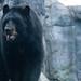 Small photo of Bear
