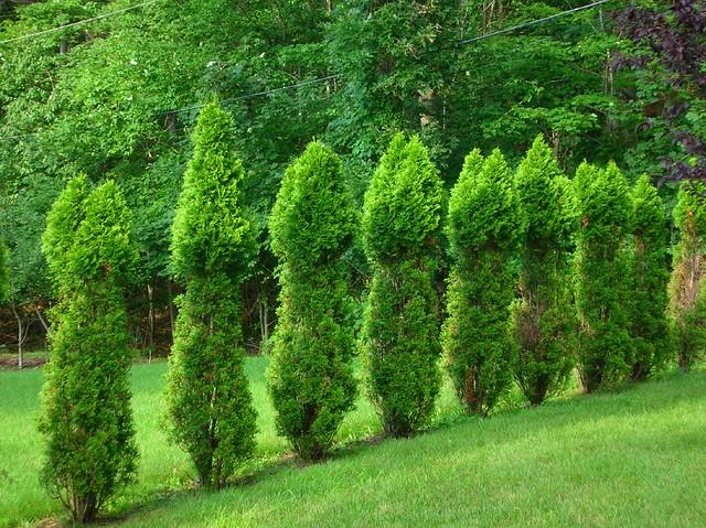 Penis trees in Grandma's Yard... Friggin Deer!