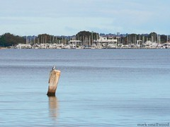 pylon_yachts