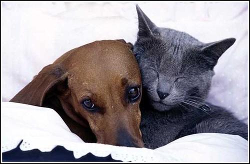 Dog and sleeping cat paris