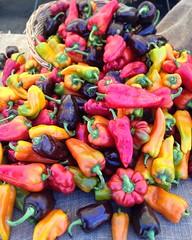 Rainbow pepper bounty at the Hillcrest Farmer's Market   #hillcrestfarmersmarket #sandiego #sandiegovegan #vegan #vegansofig #whatveganseat #p2tv #youstayhungrysd #farmersmarket
