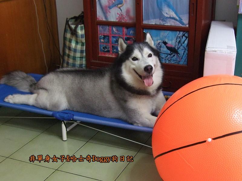 2012哈士奇doggy寵物玩具01大球