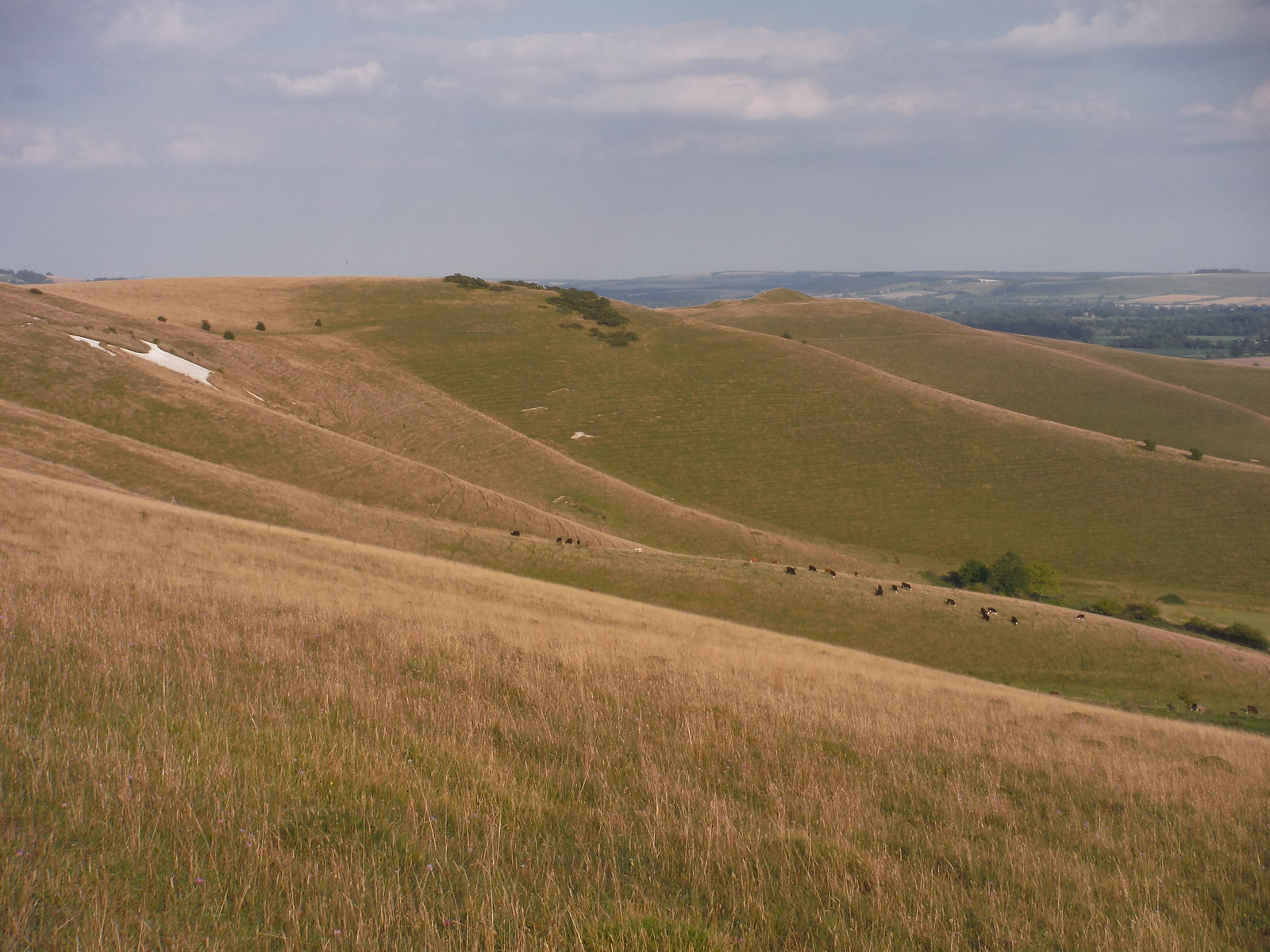 First Sight of Alton Barnes White Horse on Walkers Hill SWC Walk 127 Pewsey Circular