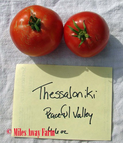 Thessaloniki Tomato Trial 2015