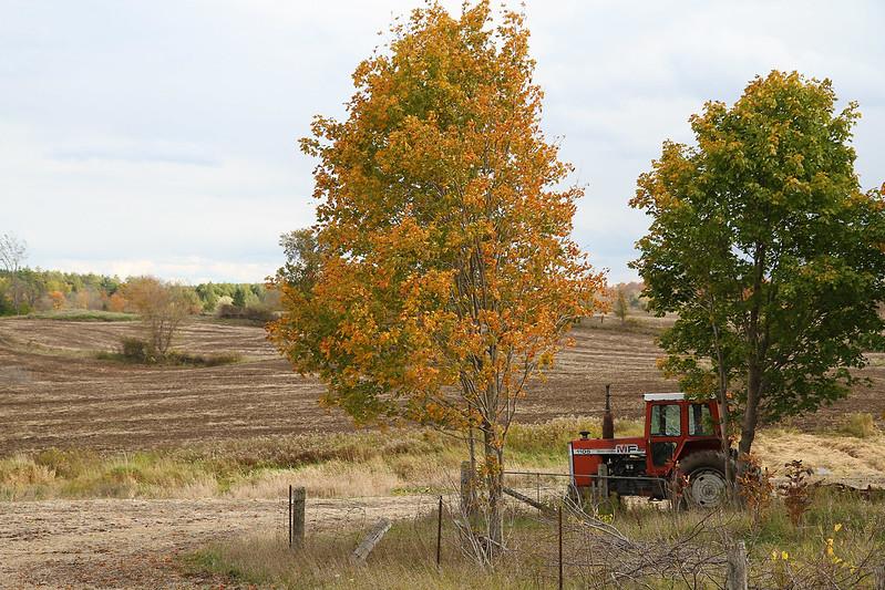 Autumn drive63