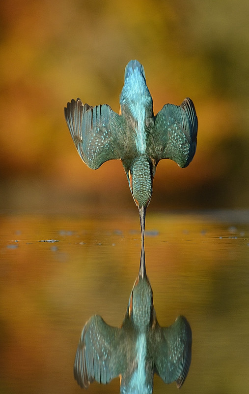 27th October 2015 Kingfisher Autumn dive