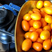 1lb of kumquats by bootpainter