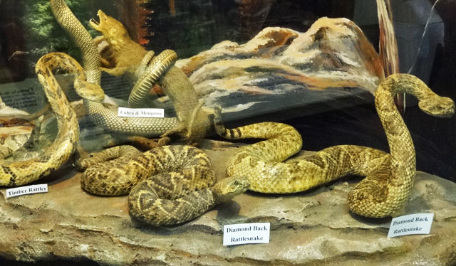 snakes-display