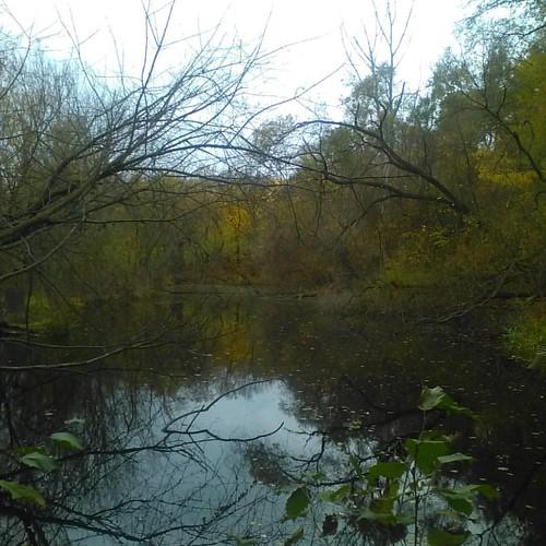Pond in autumn #toronto #riverdaleparkwest #riverdalepark #autumn #ponds