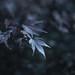 leaves * 葉っぱ by fukusuke-pon 福助ぽん