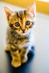 A tiny Sasha