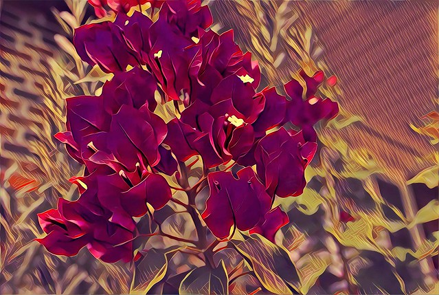 Sonnenberg Gardens & Mansion Historic Park ~ Canandaigua NY ~ Flower Cluster