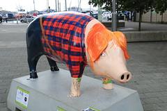Ipswich Pigs Gone Wild 2016 - 04. Ed Sheer-Ham