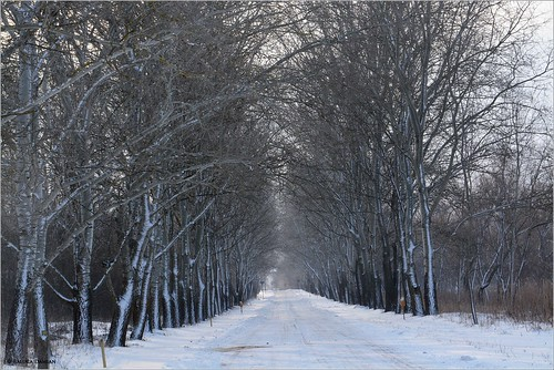 365daysfrom2017 january winter snow