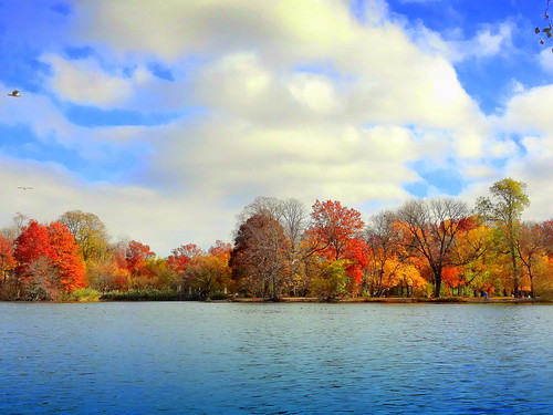 newyork brooklyn dmitriyfomenko image sky clouds trees foliage prospectpark autumn fall