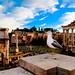 Eternal City, Rome, Italy-szúnyogháló