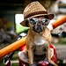 """"""" Bow wow wow, yippee yo, yippee yay."""" by Ralph Kloppenborg"""