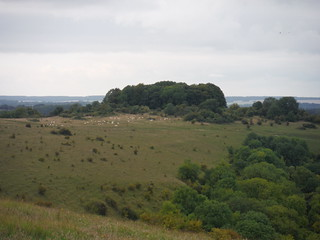 Sheep and Tumulus, Sutton Down
