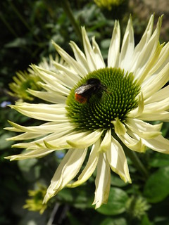 Bea on Flower