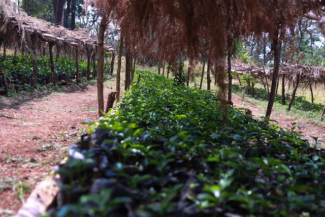 Akmel Nuri's Farm