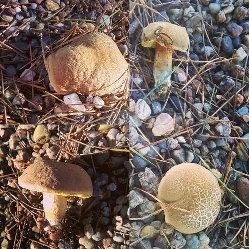 Mushroom time 😉