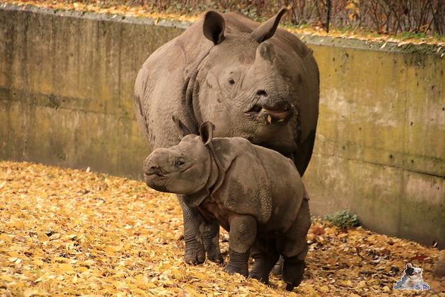 Tierpark Berlin 07.11.2015  0170