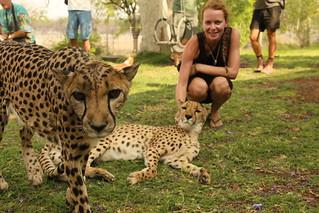 Cheetah Park.
