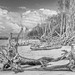 aspects of red beach 33 - the taking of the paperbark forest by Fat Burns ☮ (on/off)