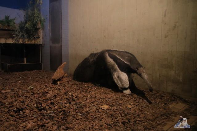 Zoo Berlin 27.11.2015   78