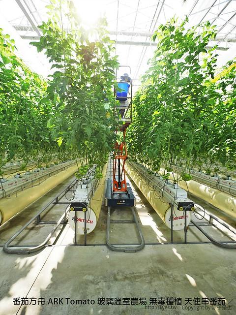 番茄方舟 ARK Tomato 玻璃溫室農場 無毒種植 天使串番茄 15