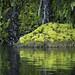 Mossy island by Kenneth Setzer