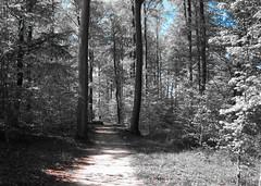 Forêt de Puvenelle1