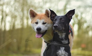 Yume & Fiasko : Best friend