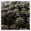 Huge haul of blackberries from the lane near our house. Recipe suggestions appreciated!