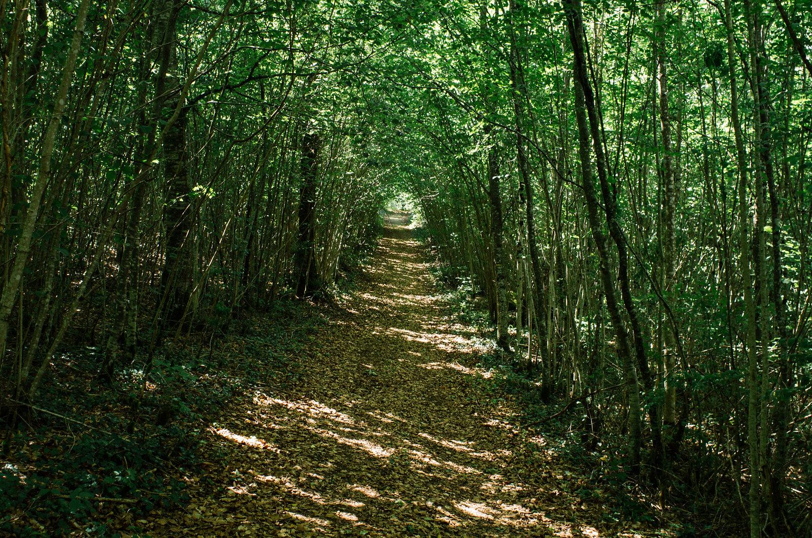 Observer les animaux - Forêt d'Auberive - Les galerie végétales