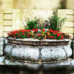Pontarlier, France :) #upsticksandgo #pontarlier #france #exploring #europeanroadtrip #michfrost #europe #instatravel #instagood #flowers #travellingtheworld